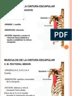 musculos de la cintura escapular y las extremidades superiores