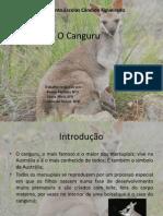 O Canguru