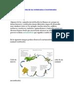 Ciclo de Vida de Los Vertebrados e Invertebrados