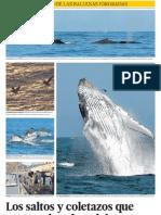 Ballenas jorobadas Mancora