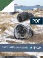 Grey Seals in Atlantic Canada
