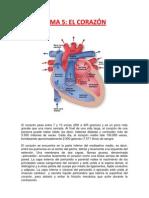 Tema 5 Sistema Coronario
