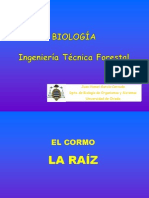 raiz3