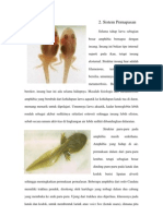 Sistem Pernafasan Amfibi