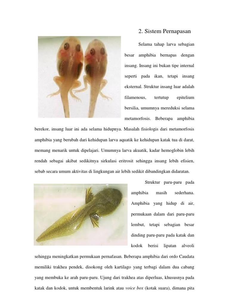 64 Gambar Alat Pernapasan Hewan Amfibi Gratis