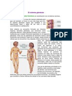 El Sistema Glandular 2012-2013