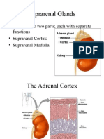 Adrenal Gland Lecture 8-9