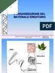 8 Lorganizzazione Del Materiale Ereditario genetica agraria uniss