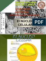GENÉTICA II 3 El Núcelo Celular