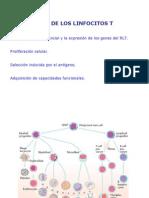 maduración de linfocitos T