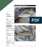 Fish in Malaysia