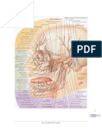 Inervacion Faciales e Intraorales