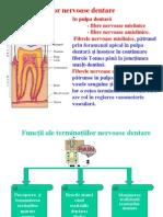 Curs 1 Hipersensibilitatea şi hiperestezia dentinară