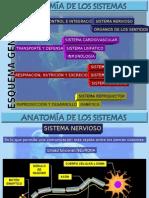 Anatomía de Los Sistemas
