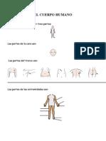 Examen el cuerpo humano adaptado 3º