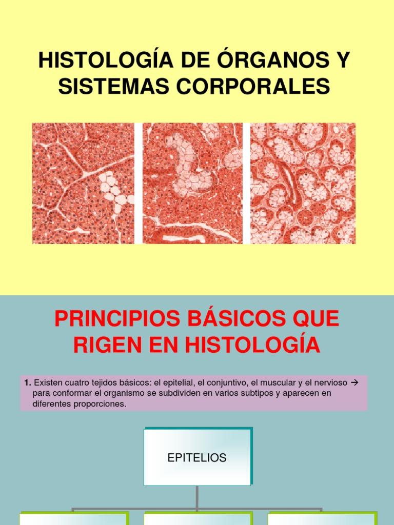 1b Histología de órganos y sistemas corporales