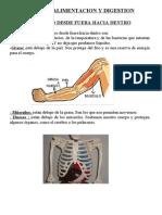 Alimentación y digestion. Tema de cono de 5º de anaya
