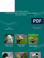 Biologie Animala-fam. Anatidae