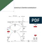 Metabolic Engineering of Clostridium Acetobutylicum