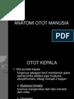 ANATOMI OTOT MANUSIA