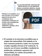 Anatomia Cerebelo