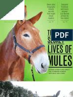 Mule Article in Vox Magazine