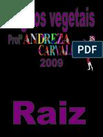 Órgãos vegetais- Carlos Barros