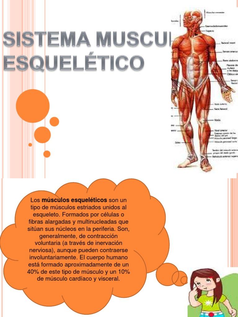 Exposicion 3 - SISTEMA MUSCULAR ESQUELÉTICO