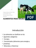 Alimentos Para Vacas Lecheras