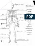 Bones Answer Key
