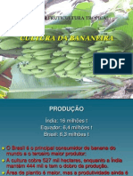 Cultura Da Bananeira_2009