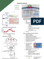 02-hormonastiroideasvero-121016205933-phpapp02