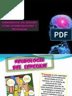 Lenguaje (Bases Psiconeuro)