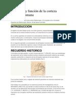 1. - Anatomía de Corteza cerebral