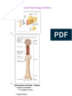 Anatomy and Physiology of Equine Bone