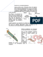 Sistema Nervioso de Los Invertebrados