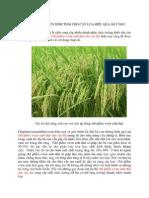 chế phẩm vườn sinh thái cho cây lúa