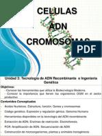 Celulas y Cromosomas