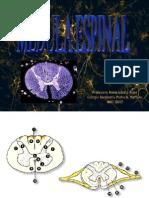 Medula Espinal (2)(1)