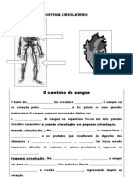 3º ano-Ficha sistema circulatorio