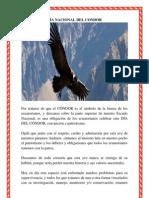 DÍA NACIONAL DEL CONDOR