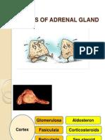 [Phatology]Adrenal
