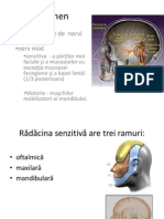 stagiul_1_nervul_trigeme