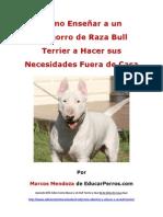 Como Enseñar a un Cachorro de Raza Bull Terrier a Hacer sus Necesidades Fuera de Casa