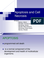 Apoptosis and Cell Necrosis