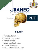Craneo (1)