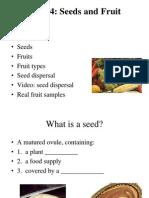 Biji Dan Buah (Seeds and Fruit)