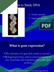 2010-DNAreplixpression