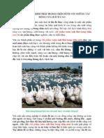 chế phẩm vườn sinh thái trong chăn nuôi