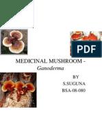 Medicinal Mushroom - Ganoderma......